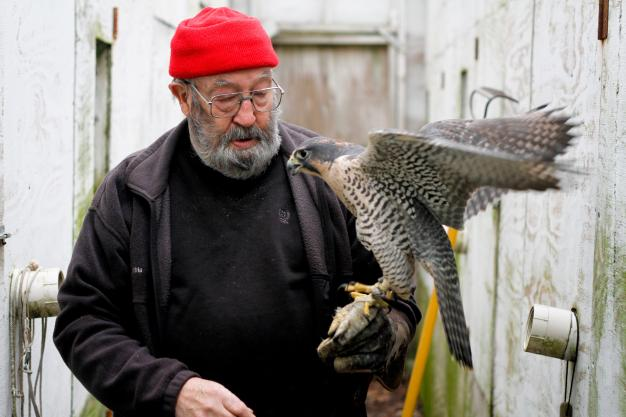 Ancient Sport Of Falconry Continues In Pa The Allegheny Front